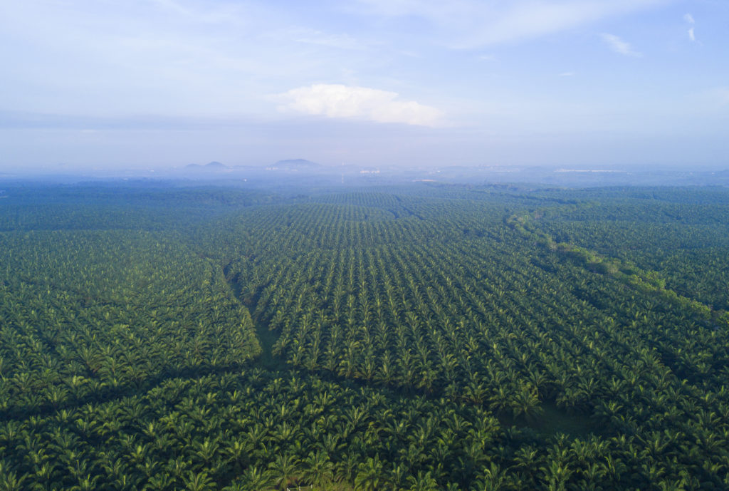 AI Solutions for the Palm Oil Industry
